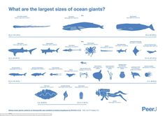 The project's goal was to get accurate size measurements for the largest known marine spec...