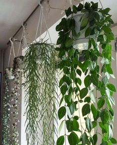 top hanging plants tips! - Garden Easy - 20 top hanging plants tips! 20 top hanging plants tips! # hanging plants The post 20 top han - Plantas Indoor, House Plants Decor, House Plants Hanging, Balcony Hanging Plants, Hanging Pots, Hanging Plant Diy, Vine House Plants, Hanging Herb Gardens, Bedroom Plants Decor