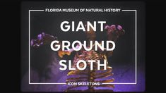 The Giant Ground Sloth, Eremotherium eomigrans, is the largest sloth to disperse from South America into North America during the Great American Interchange . Disney Documentary, Adventures By Disney, One Tree, Animation Film, Natural History, Fossils, Art Lessons, North America