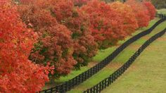 Kentucky's scenic Bluegrass area takes on a special beauty in the autumn months. To enjoy the fall colors, VisitLex.com suggests visitors take self-guided Bluegrass Country Driving Tour, or taking fall foliage tours by boat on the Dix and Kentucky rivers.