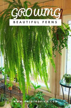 Ferns are easier to grow than you may think.