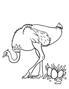 printable ostrich coloring page free pdf download at httpcoloringcafecom - Stingray Coloring Pages Printable