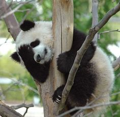 """Aw man, I forgot to get my bamboo."""