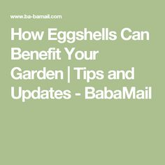 How Eggshells Can Benefit Your Garden | Tips and Updates - BabaMail