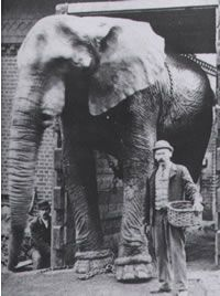 In May Jumbo (pictured here), was one of the 21 elephants of P. Barnum that crossed the Brooklyn Bridge. In order to prove that the bridge was safe. Vintage Photography, Street Photography, Jumbo The Elephant, Pt Barnum, Circo Vintage, Zoo Photos, Work With Animals, The Greatest Showman, Circus Theme