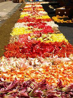 Corpus Christi flower carpet. Happy Feast of Corpus Christi