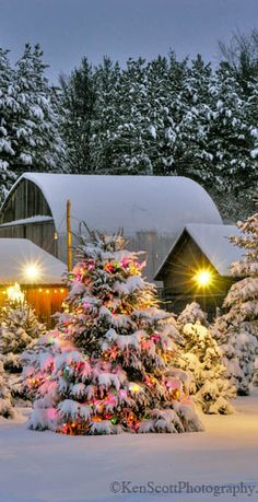Christmas tree farm in Leelanau Country, Michigan • photo: Ken Scott on Flickr