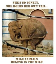 pic.twitter.com/o4JWZThvIr @Peta Hartmann Hartmann @ste_kenya @- Wind Farm Dahl #animalrights #respect