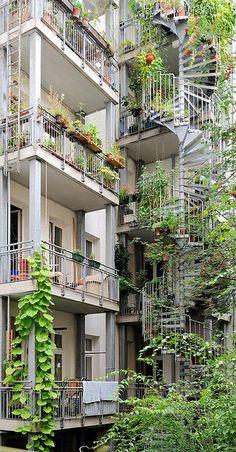 Grüner Hinterhof in Hamburg Eimsbüttel - Balkons und Feuertreppe mit wuchernden Grünpflanzen bewachsen.