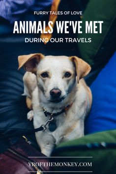 This post is about all our animal encounters during our travels in USA and abroad (Turkey). No zoos or cruel amusement parks, this is about making friends with farm animals and domestic pets, i.e. adorable cats and dogs at our Airbnbs, B&Bs and other inns where we stayed or shops were we stopped by! A fun read for all animal lovers and pet parents.