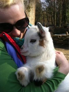 This Babygoat Fell in Love