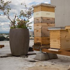 Don't have a backyard? Rooftop beekeeping could BEE for you!
