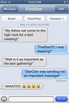 Warrior Cats of having a text meeting!! By @Cheezit Kitty
