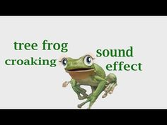 The Animal Sounds:  Tree Frog  Croaking - Sound Effect - Animation