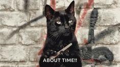 Salem Sabrina, Black Cat Day, Black Cats, International Cat Day, Memes, Dog Houses, Cat Gif, Best Funny Pictures, Dog Cat