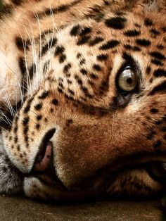 Stunning animal