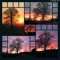 Photo Collage Familiar Trees At Sunset