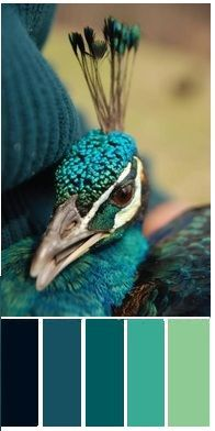 color palette - Peacock Color