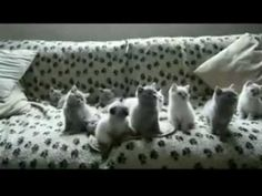 Bunch of Kittens Bopping Their Heads to Music