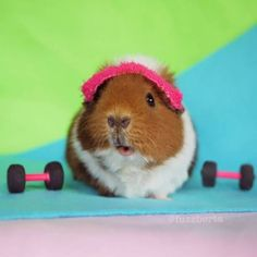 Fuzzberta works out