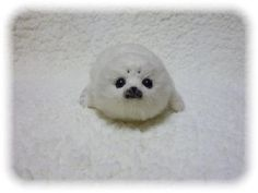 Baby seal ♥ my 1nd favorite animal!                     its so cute is it