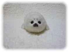 Baby seal ♥ my 2nd favorite animal!