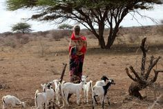 On location with HALF THE SKY: A woman with her goats in Somaliland (Courtesy Nicholas Kristof)