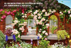 Cultivo de rosas en Jardineras