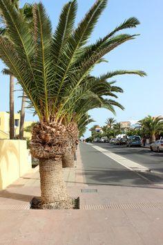 Fuerteventura / Corralejo