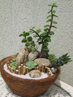 23 Mini Succulent Garden If you are in need of a cute and simple to maintain garden, you should try out using cacti and succulents Succulent Landscaping, Succulent Gardening, Garden Terrarium, Succulent Terrarium, Container Gardening, Succulent Ideas, Organic Gardening, Gardening Tips, Succulents In Containers
