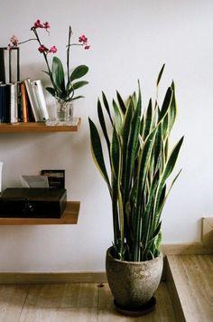 1000 id es sur plantes d polluantes sur pinterest sansevieria trifasciata r utiliser et en bois - Steun de plantes d interieur ...