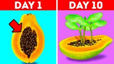 Small Vegetable Gardens, Home Vegetable Garden, Small Gardens, Small Garden Hacks, Growing Watermelon From Seed, How To Grow Watermelon, Growing Veggies, Growing Plants, Eco Garden