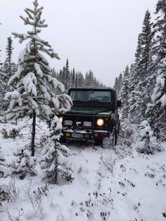Just Looking for a Christmas Tree....Land Rover Defender Style