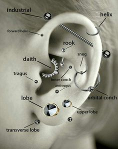 A guide to some ear piercings, featuring my personal favorite Tragus and rook✨ – Marina H. A guide to some ear piercings, featuring my personal favorite Tragus and rook✨ A guide to some ear piercings, featuring my personal favorite Tragus and rook✨ Ear Piercing Diagram, Ear Piercings Chart, Piercing Chart, Ear Peircings, Types Of Ear Piercings, Cute Ear Piercings, Ear Piercing Guide, Different Ear Piercings, Unique Piercings