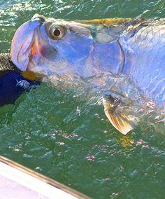 Winter 2014 ~ Dun ~ The Magazine Salt Water Fish, Salt And Water, Fishing Boats, Fly Fishing, Bass Fishing Shirts, Fish Sculpture, Javanese, Fishing Guide, Fishing Quotes