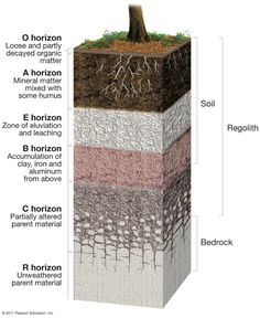 horizon diagram soil formation volvo v70 wiring 2001 profile for school layers garden science 4 25 friday