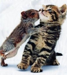 Ein kleiner, schüchterner Kuss für dich