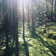 Skogsmagi Indery sagainderoy dengyldneomvei