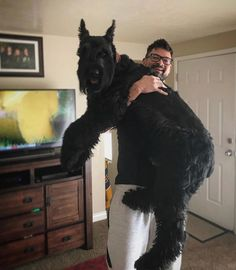 A big beautiful giant schnauzer! I had no idea they existed this large. Giant Schnauzer, Schnauzer Puppy, Miniature Schnauzer, Schnauzer Grooming, Big Dogs, Cute Dogs, Dogs And Puppies, Doggies, Yorky