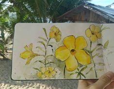 Yellow flower watercolor sketch