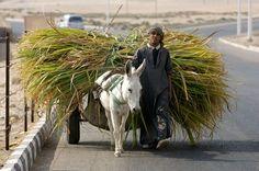 Luxor. Il villagio di El Qurnah - id: 4871