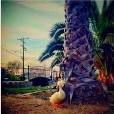 Destination number TEN: Los Angeles, California