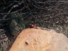 Ladybird on stump by Tomáš Zúbrik on 500px