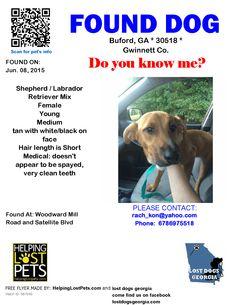 Found Dog - Shepherd - Buford, GA, United States