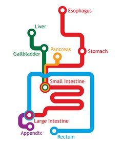 The Gastrointestinal System Represented as a Subway Map