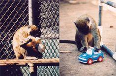 8 Human-Like Behaviors of Primates
