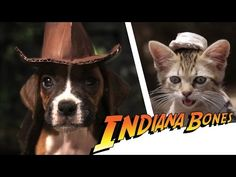 Indiana Bones Is Your Adorable Dog Archaeologist [Video]