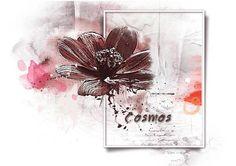 Défi Gilberte - Photo proposée COSMOS 2 - Album de pages de scrap. - Galerie Scrapbooking