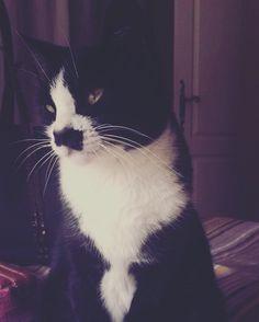 Chat !  Moustache !  Cat