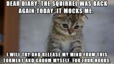Dear Diary: The Squirrel Was Back Again Today... #catoftheday